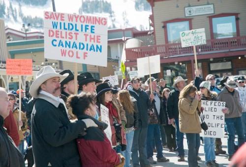 Dispelling Canadian Wolf Myth