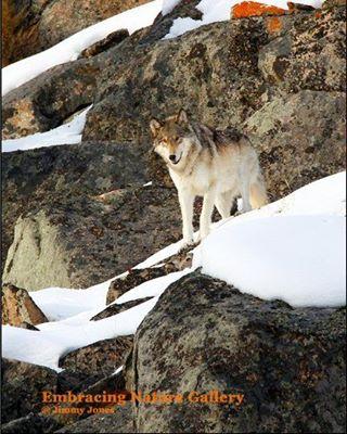 Wolf Ledge
